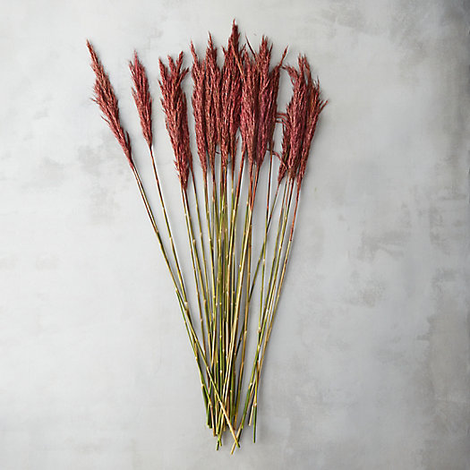 Preserved Plume Reed Bunch