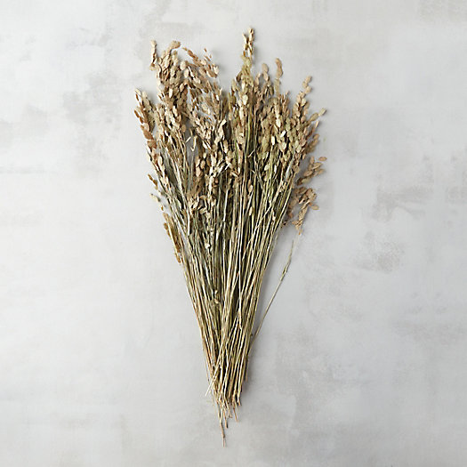 Dried Sea Oat Bunch