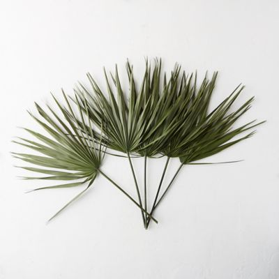 Preserved Palmetto Frond Bunch