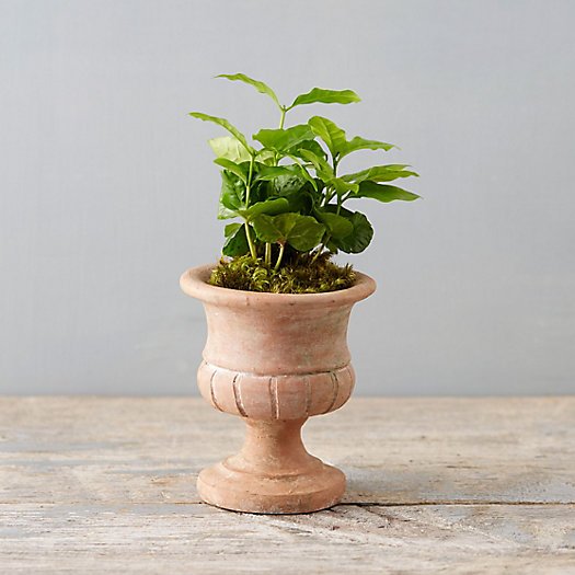 Terracotta Wide Mouth Mini Urn