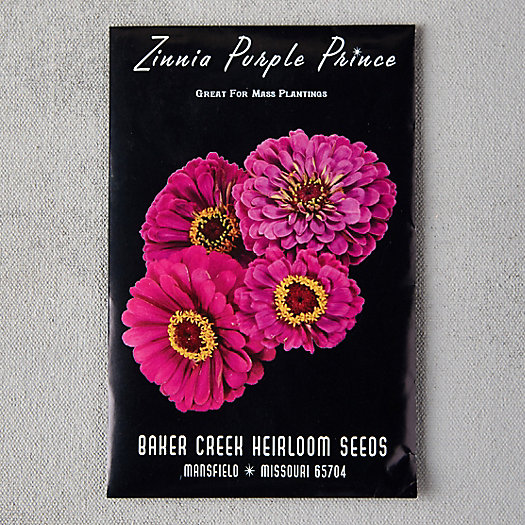 Purple Prince Zinnia Seeds