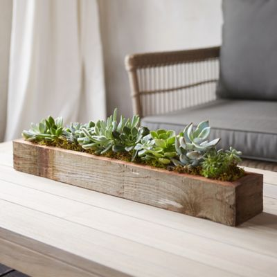 Living Succulent Centerpiece Trough