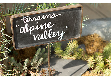 Blooming Spotlight: Alpine Valley