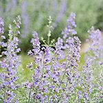 Wine & Conversation: Bug Repellent Plants