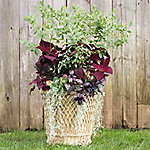 Autumn Container Gardens