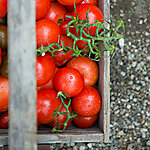 Heirloom Tomato Dinner with Happy Cat Farm