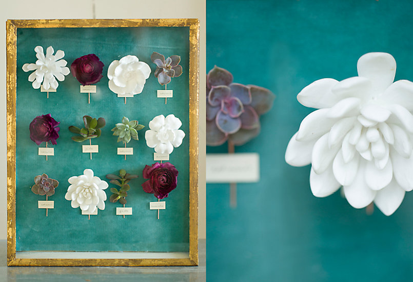 How-To: Floral Specimen Shadowbox