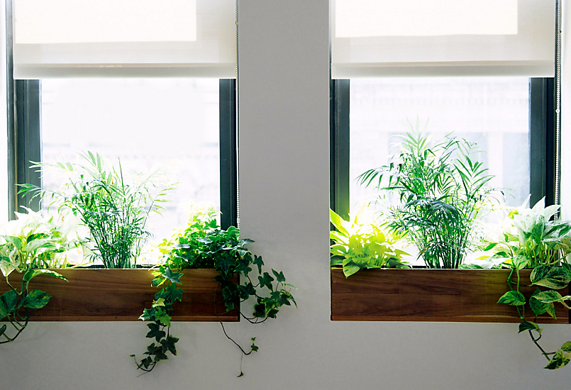 indoor window garden box