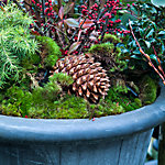 Winter Container Planting
