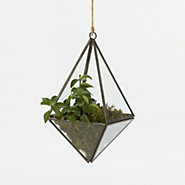 Shop the Project: Diamond Terrarium