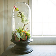 Shop the Project: Tillandsia Cloche