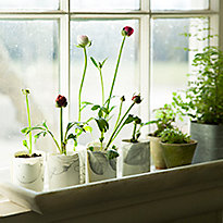 Head Start: A Windowsill Seed Garden