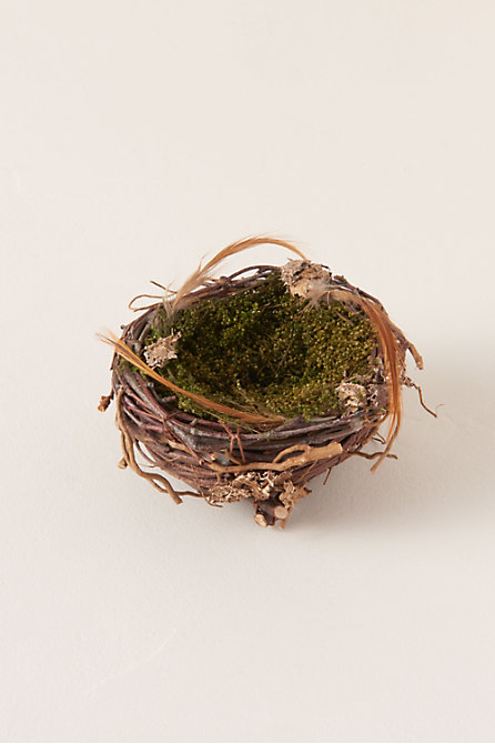 Small Wrens Nest