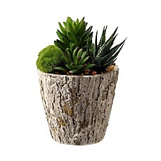 image of D&W Silks Aloe and Succulents in Weathered Oak Look Planter