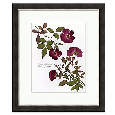 Buy pressed flowers 1 framed wall art from bed bath beyond for Where to buy framed art