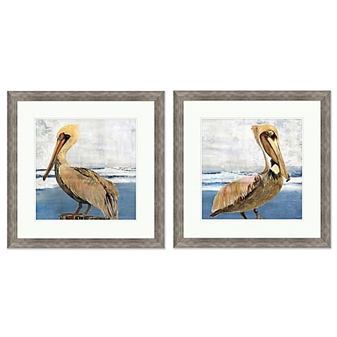 Pelican Portrait\