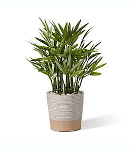 Planta artificial de bambú Elements™ con maceta de cerámica