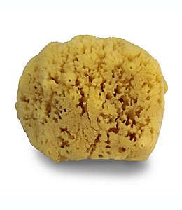Esponja de mar natural Swissco®