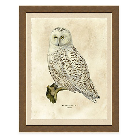 Buy white owl framed art print from bed bath beyond for Where to buy framed art