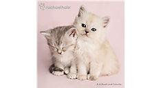 Rachael Hale Cats Wall Calendar (Item # DDD583)