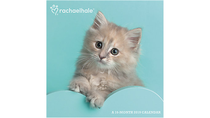 Day Dream Rachael Hale Cats Wall Calendar  (DDD583)