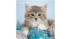 Rachael Hale Cats 12x12 Monthly Wall Calendar (Item # DDD583)