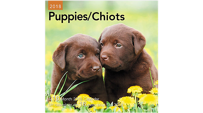 Day Dream Puppies Bilingual Mini Wall Calendars  (DDMF47)