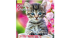 Kittens Bilingual Mini Wall Calendars (Item # DDMF49)