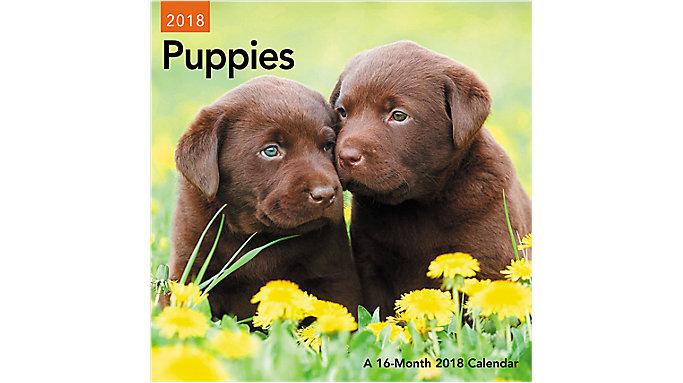 Day Dream Puppies Mini Wall Calendar  (DDMN47)