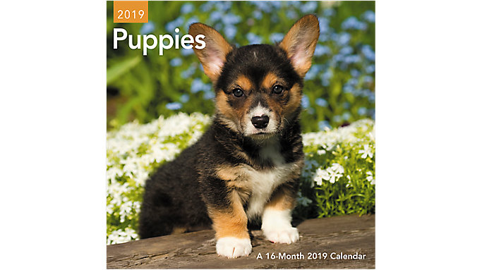 Day Dream Puppies Mini Wall Calendar  (DDMN47)