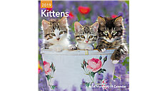 Kittens Mini Wall Calendar (Item # DDMN49)