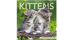 Kittens 7x7 Mini Monthly Wall Calendar (Item # DDMN49)