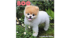 BOO The World's Cutest Dog 7x7 Mini Monthly Wall Calendar (Item # DDMN71)