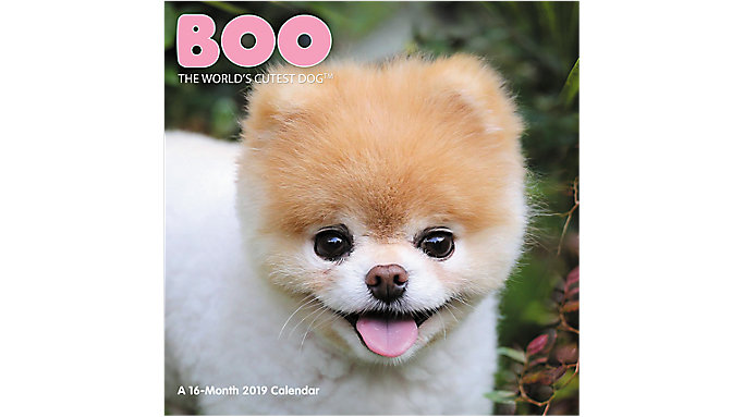 Day Dream BOO The Worlds Cutest Dog Wall Calendar  (DDW062)
