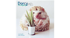 Darcy the Hedgehog Wall Calendar (Item # DDW124)
