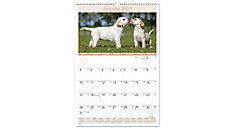 Puppies Monthly Wall Calendar (Item # DMW167)