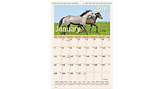 Horses Monthly Wall Calendar (Item # DMW401)