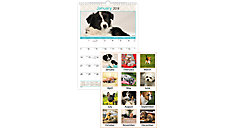 Puppies Monthly Wall Calendar (Item # DMW404)