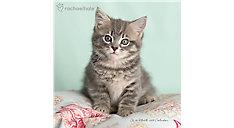 Rachael Hale Cats Wall Calendar (Item # HTH339)