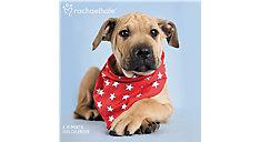 Rachael Hale Dogs Wall Calendar (Item # HTH340)