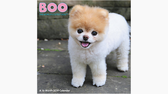 Boo The Worlds Cutest Dog Wall Calendar Hth549 Mead