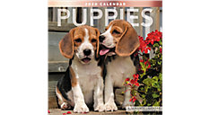 Puppies 12x12 Monthly Wall Calendar (Item # LME100)