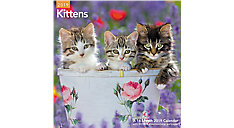 Kittens Wall Calendar (Item # LME134)