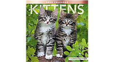 Kittens 12x12 Monthly Wall Calendar (Item # LME134)
