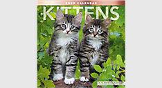 Kittens 12x12 Monthly Wall Calendar (Item # LME134)