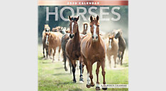 Horses 12x12 Monthly Wall Calendar (Item # LME159)