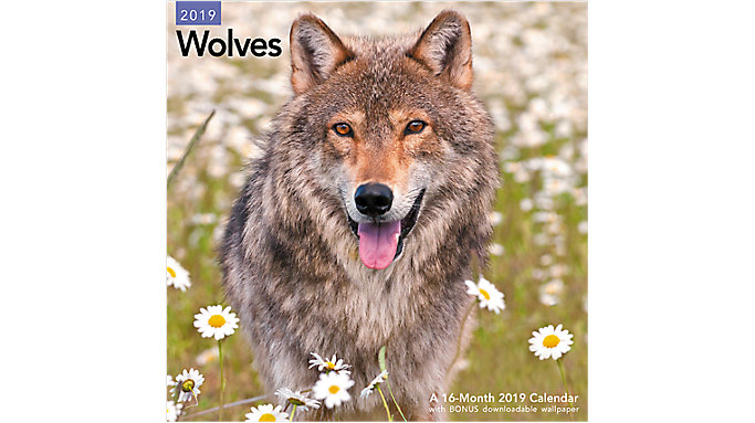 Mead Wolves Wall Calendar  (LME168)