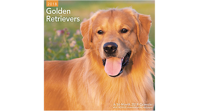 Mead Golden Retrievers Wall Calendar  (LME322)