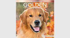 Golden Retrievers 12x12 Monthly Wall Calendar (Item # LME322)