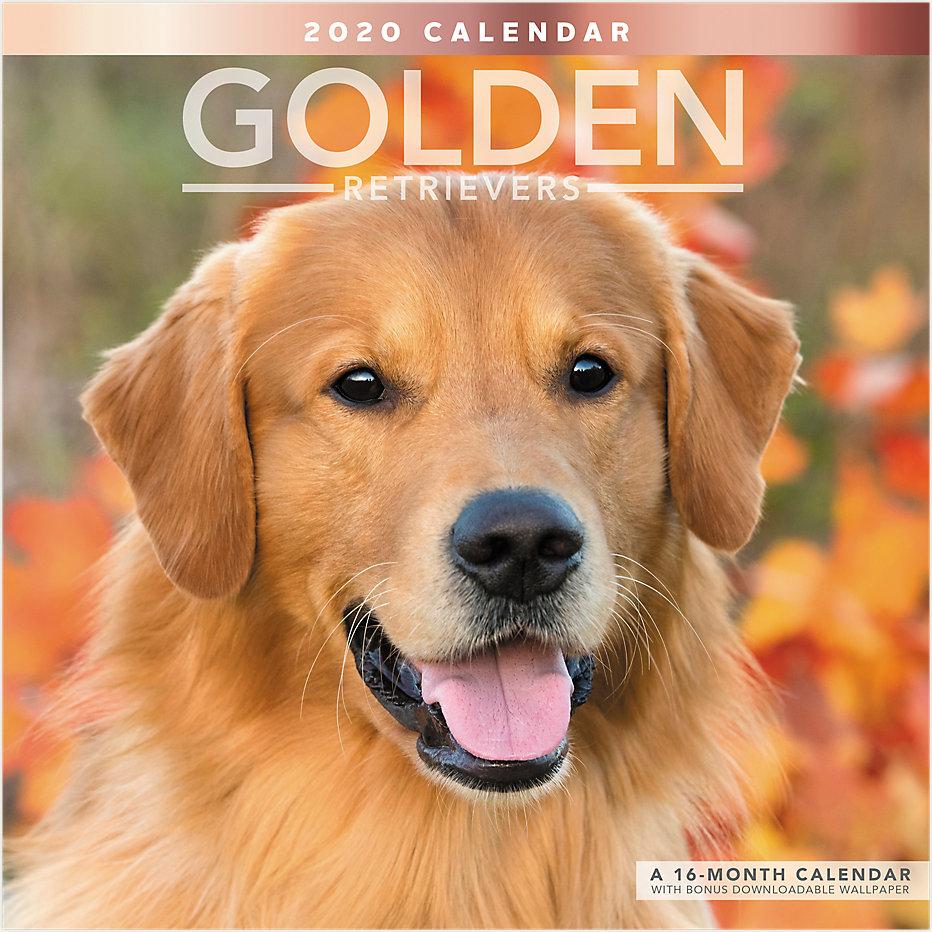Golden Retrievers 12x12 Monthly Wall
